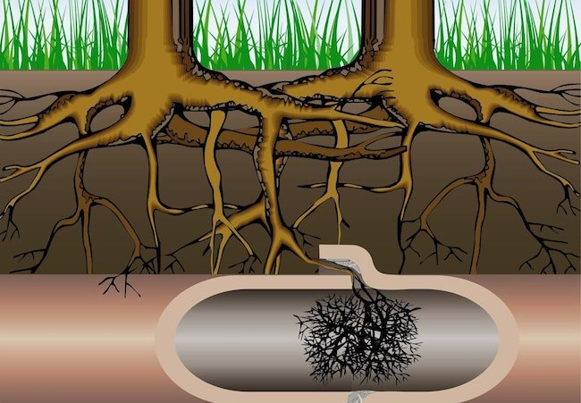 Removing Tree Roots From Sewer Lines in NJ